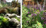 small-front-garden-with-hostas-and-hellebores