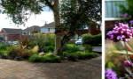 small-front-garden-with-verbenas-and-perennials