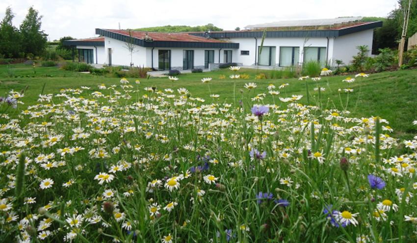 large-modernist-garden