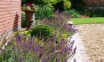 structured-garden-in-derbyshire-with-lavender